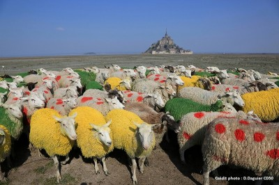 Moutons baie TDF 2016 [800 x 600]